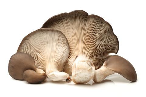 39d404182 Aromas e Boletos - Cogumelos, Produtos e Serviços