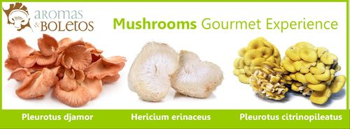 Mushrooms Gourmet Experience