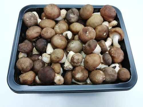 mini shiitake