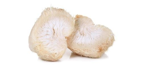 Mother Spawn Hericium erinaceus - 3 kg