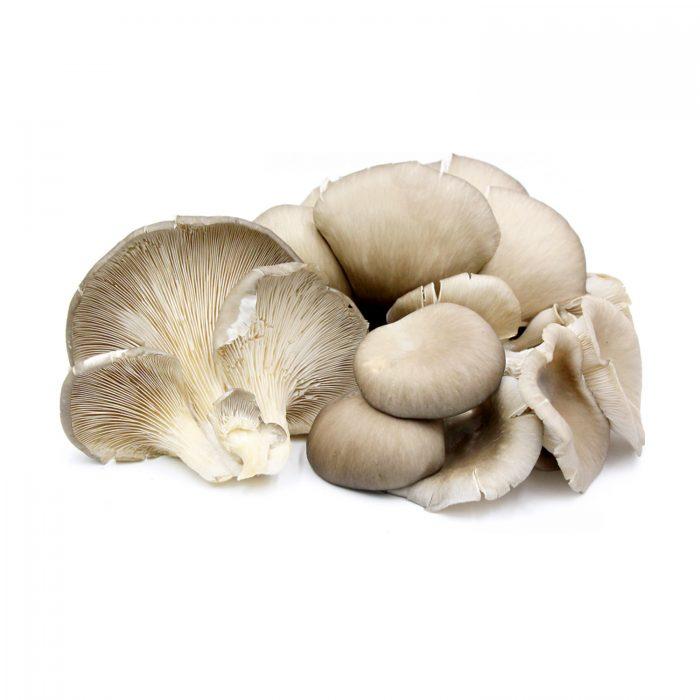 cavilhas-inoculadas-pleurotus-ostreatus