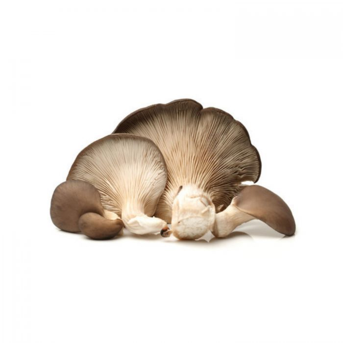 cogumelo-ostra-ou-repolgapleurotus-ostreatus